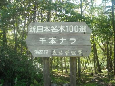 PIC0070Z.JPG
