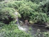 三滝道中の一・小さな滝