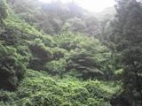 三滝道中の三・朝靄にけぶる山林