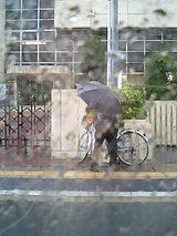 日曜日はすんげー雨朝