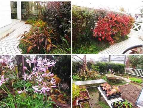 11月22日自宅の庭