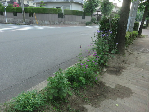 7月22日道路際の花壇2