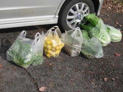 12月9日野菜収穫