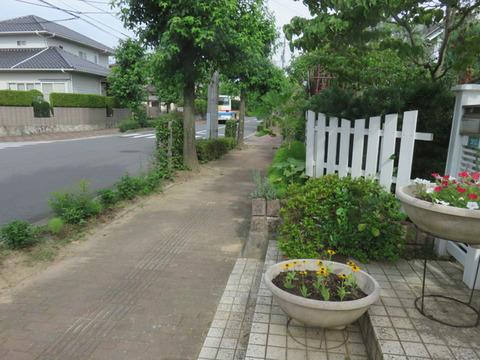 7月17日道路際の花壇1