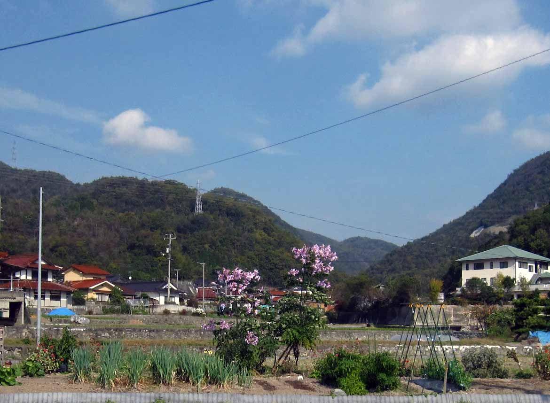 安芸乃島勝巳の画像 p1_7