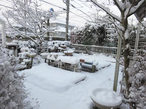 1月15日雪 (1)