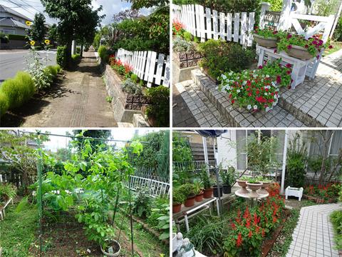 9月17日今日の庭