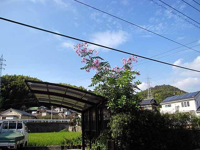 安芸乃島勝巳の画像 p1_4