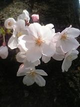 05-04-06_12-33.jpg