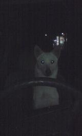 運転犬[1]