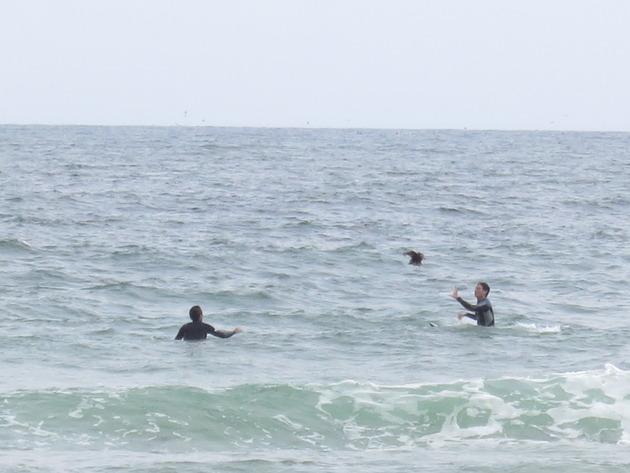 夏だ!海だ!エンドレスサマー制度だ!平日を満喫しているサーフィン部に密着してみました。