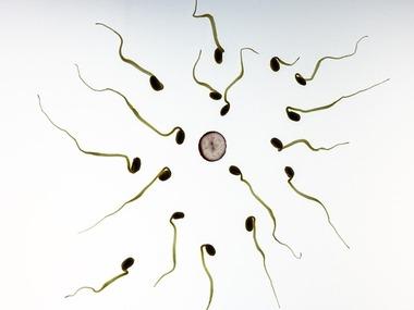 sperm-956480_960_720[1]