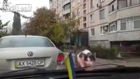 ワイパーと猫