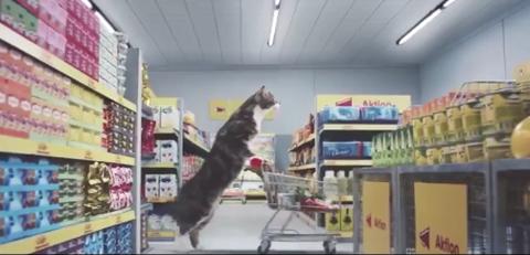 猫だらけなドイツのスーパーマーケットCM