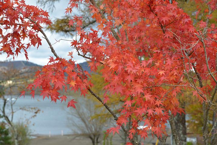 山中湖の紅葉。。。(続き)
