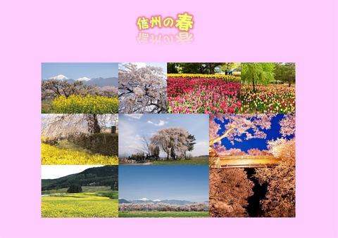 ブログ用 信州の春