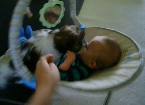 子犬 赤ちゃんベッドに登ってペロペロ04