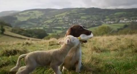 犬 子羊にミルクを01