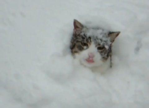 猫は喜び庭駆け回る03