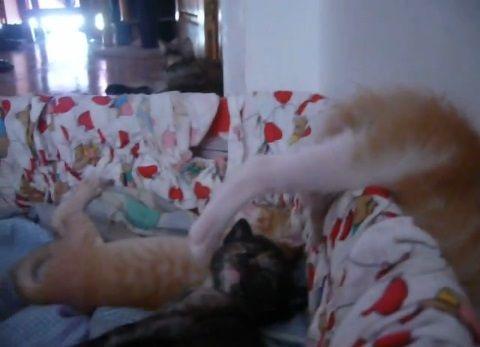 子猫 寝相が悪すぎ03