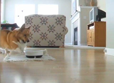 犬 餌が来るとピョンピョン04