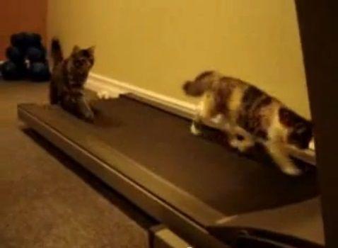 猫 ルームランナーで歩こうと04