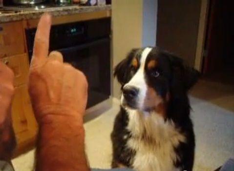 犬 I Love You、言えてる?03