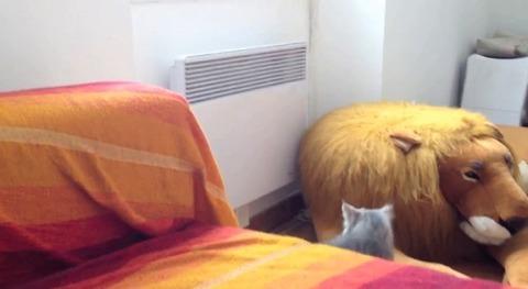 猫 自分のしっぽで回転して05