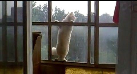 猫 6階の窓を伝って00