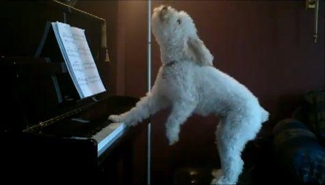 犬 piano 弾語り08