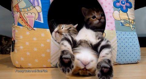 子猫 ベッド?からはみ出して寝る01
