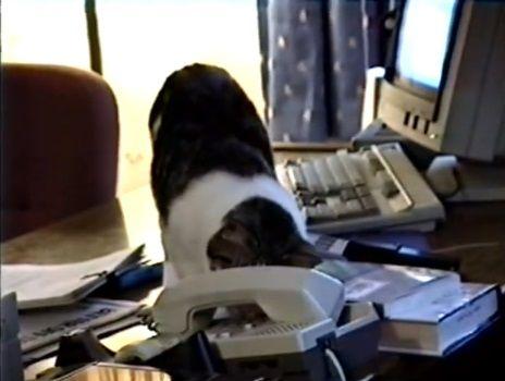 猫 電話に出ない05