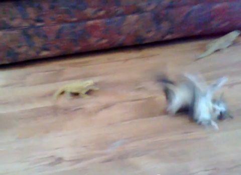 子猫 トカゲ11