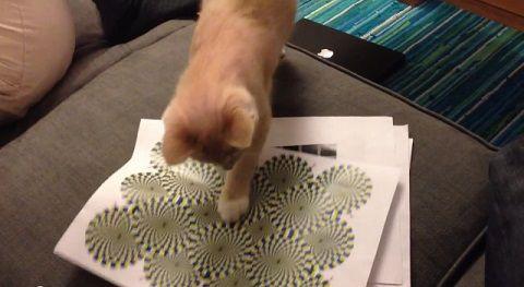 猫 錯視画像に反応01