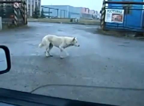 犬 ビートにノリノリ03