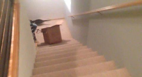 猫 段ボールに入りたい!でもそこは階段!04