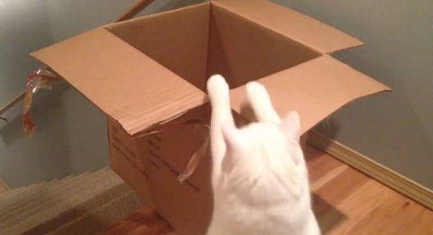 猫 段ボールに入りたい!でもそこは階段!00
