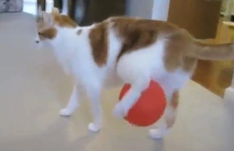 猫 風船03