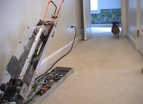 犬 ピッチングマシン?06