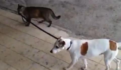 猫が犬をリードで03