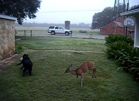 犬 鹿と遊ぶ05
