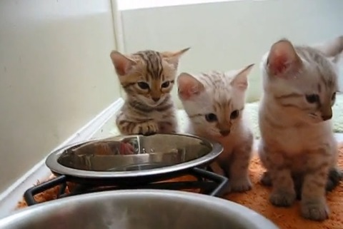 子猫 2匹そろってウトウト03