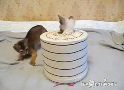 子猫 猫要塞の攻防07