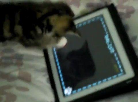 子猫 ipadその1 00