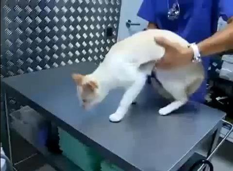 猫 大人しくする方法00