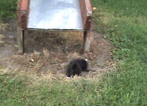 子猫 滑り台でhelp06