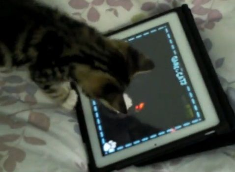 子猫 ipadその1 02