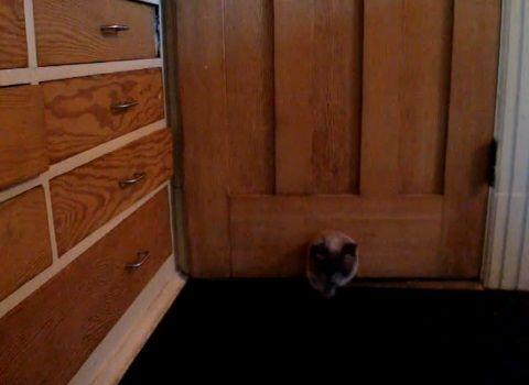 猫 ドアを開ける変わった方法00
