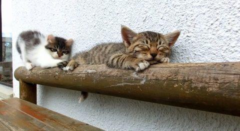 子猫 寝ている子猫に遊んで欲しい01