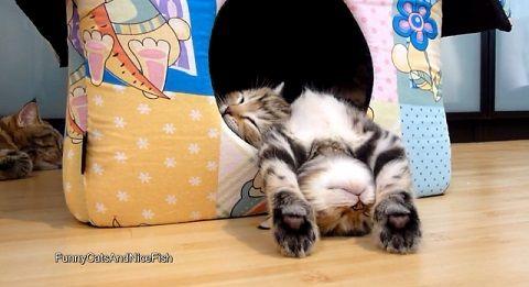 子猫 ベッド?からはみ出して寝る00